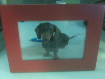 Hehehe.  That's my mini dachshund, Frankie.  It's kind of blurry, but his eyes are closed!  What kind of dog closes his eyes during photos?!
